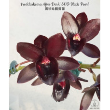 Fred. After Dark SVO Black Pearl