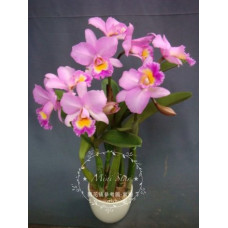 Blc. Chian-Tzy Years Fantasy