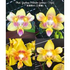 Phal. Yaphon Perbalm 3 Lips