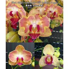 Phal. Fullers Gold Stripe 458 бабочка