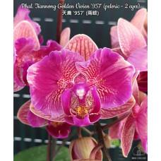 Phal. Tiannong Golden Vivien 957 бабочка