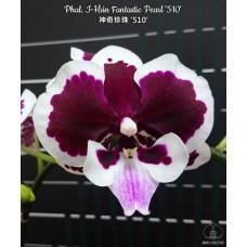 Phal. I-Hsin Fantastic Pearl 510 big lip