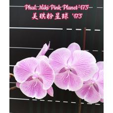 Phal. Miki Pink Planet 173 big lip