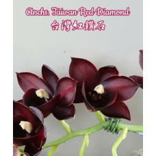 Ctnchs. Taiwan Red Diamond