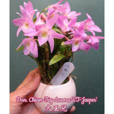 Den. Chian-Tzy Aurora CT-Jasper