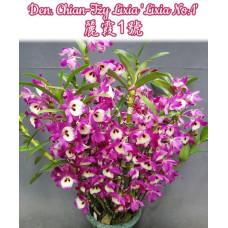 Den. Chian-Tzy Lixia Lixia No.1