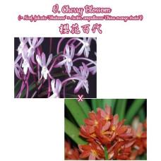V. Cherry Blossom