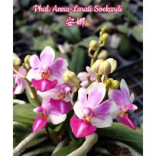 Phal. Anna-Larati Soekardi