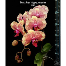 Phal. Arks Happy Magician