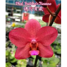 Phal. Buddhas Treasure