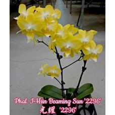 Phal. I-Hsin Beaming Sun 2296