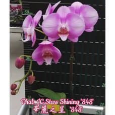 Phal. JC Stars Shining 848