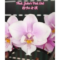 Phal. Jiahos Pink Girl 1,7