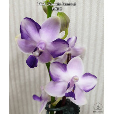 Phal. Kenneth Schubert