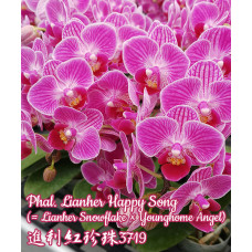Phal. Lianher Happy Song