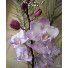 Phal. Lius Sakura KF 1,7