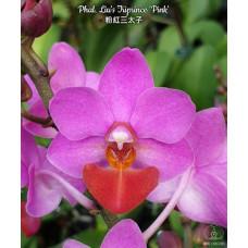Phal. Lius Triprince Pink