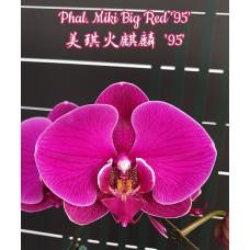 Phal. Miki Big Red 95