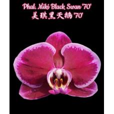 Phal. Miki Black Swan 70
