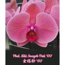 Phal. Miki Imayoh Pink 170