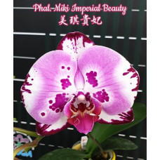 Phal. Miki Imperial Beauty 1,7