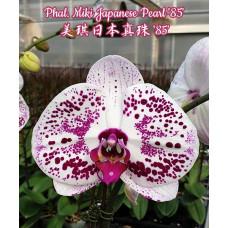 Phal. Miki Japanese Pearl 85