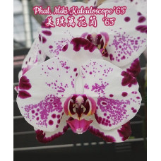 Phal. Miki Kaleidoscope 65