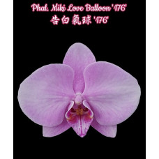 Phal. Miki Love Balloon 176