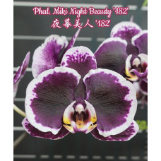 Phal. Miki Night Beauty 182
