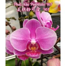 Phal. Miki Pink Cutie 161