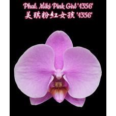 Phal. Miki Pink Girl 1356