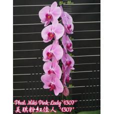 Phal. Miki Pink Lady 1307