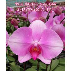 Phal. Miki Pink Lady 1344