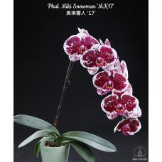 Phal. Miki Snowman MK17