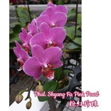Phal. Shyang Fa Pink Pearl
