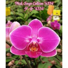 Phal. Sogo Colleen 4334