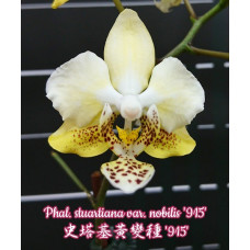 Phal. Stuartiana var. Nobilis 915
