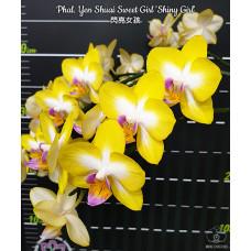 Phal. Yen Shuai Sweet Girl Shiny Girl