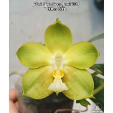 Phal. Yins Green Jewel 899