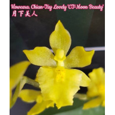 Howeara Chian-Tzy Lovely CT-Moon Beauty
