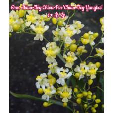Onc. Chian-Tzy Chiou-Pin Chian-Tzy Yangtze