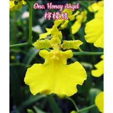 Onc. Honey Angel