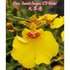 Onc. Sweet Sugar CT-Wide