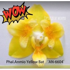 Phal. Yaphon Anmino Yellow bat ES AN-6604 бабочка