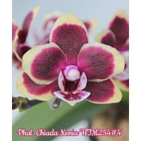 Phal. Chiada Xenia HTM254 4