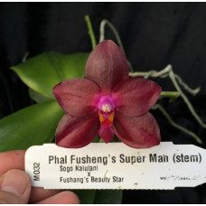 Phal. Fushengs Super Man Mituo