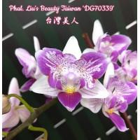 Phal. Lius Beauty Taiwan DG70339 бабочка