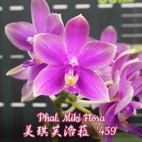 Phal. Miki Flora