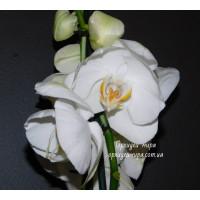 Phal. White бабочка №199 уценка