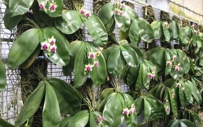 Методы посадки орхидей